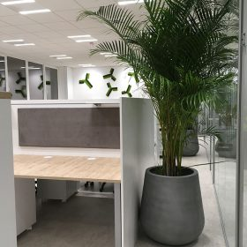 fioriere-cemento-palma
