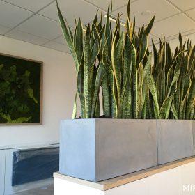 fioriere-per-piante-rettangolari