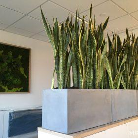 fioriere-rettangolari-cemento-per-piante