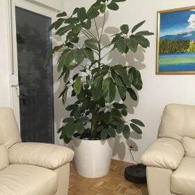 posude-za-cvijece-bijele-biljka