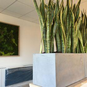posude-za-cvijece-unutarnje-betonske-duge