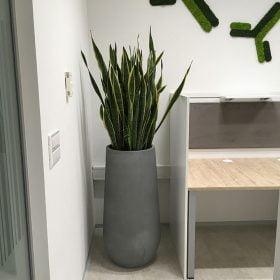 vasi-cemento-piante