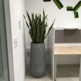 posude-za-cvijece-betonske-moderne